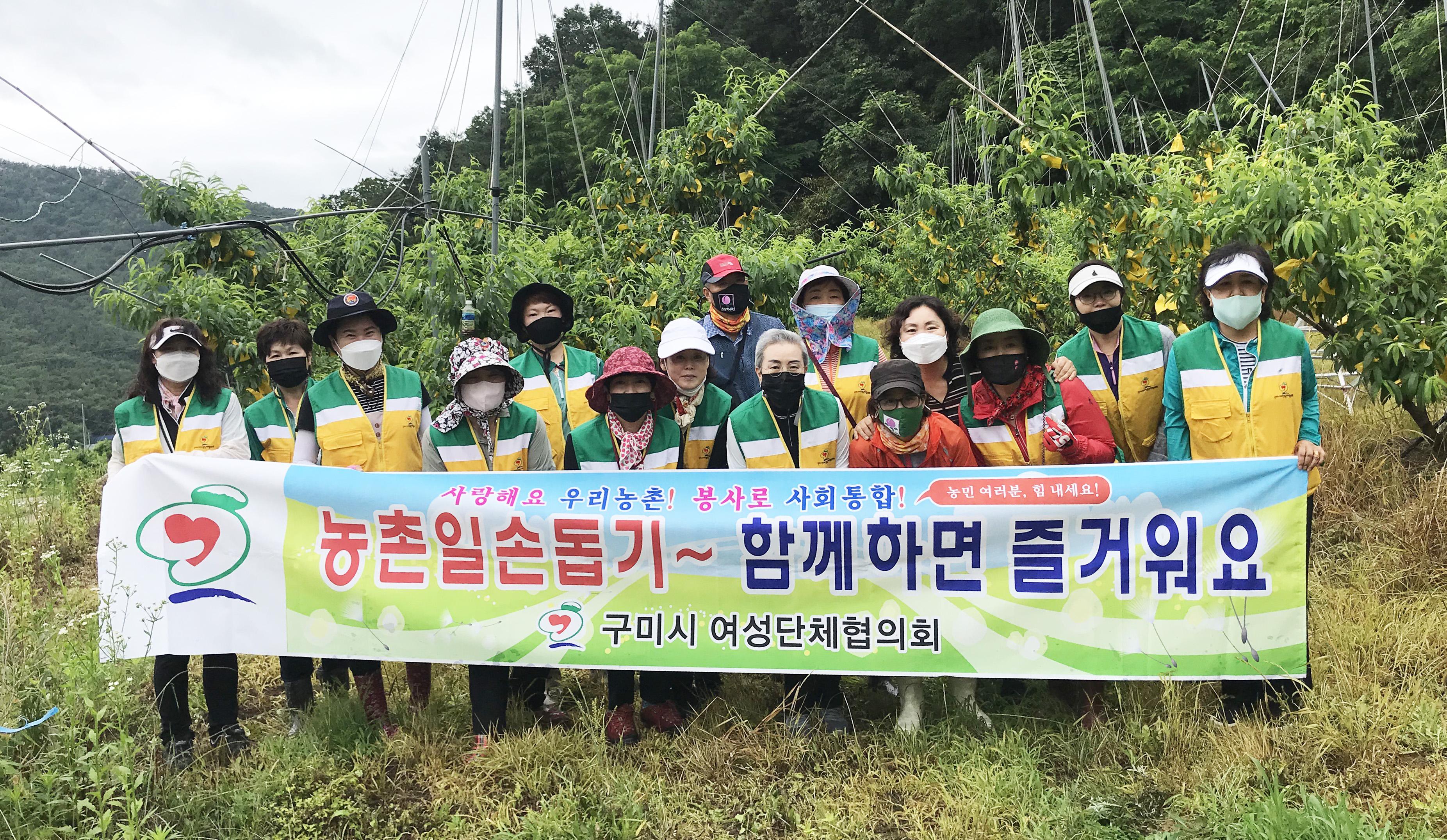 구미시여성단체협의회, 농번기 맞아 농촌 일손돕기 구슬땀 흘려!