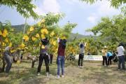 구미시의회사무국 직원들 옥성면 대원리에서 농촌 일손돕기 봉사